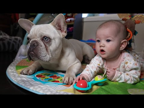 French Bulldog Puppy and Baby Best Friends! - Puppy Therapy