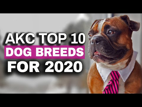 Most Popular Dog Breeds of 2020 in the USA