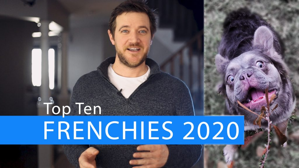 Top French Bulldog Color Trends of 2020!