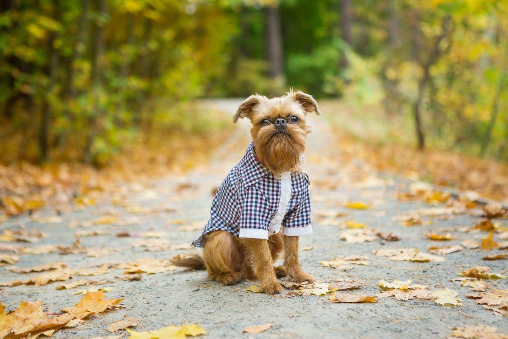 Most Popular Dog Breeds of 2020 (USA – American Kennel Club)